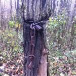 Strangled Tree
