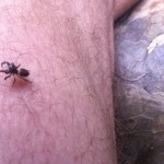 Spider Friend 2